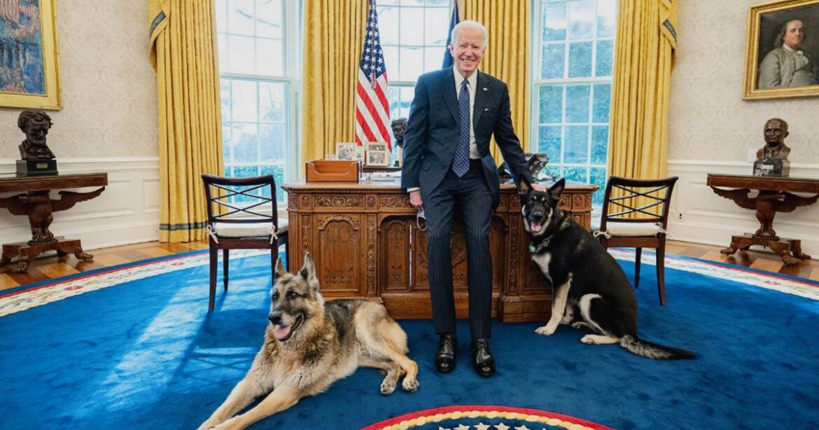 Biden's Dogs Gone, but…